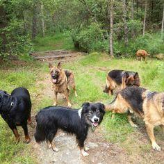 DoggieDog Hundrastning i Kungälv. Hundpensionat i Västerlanda, Lilla Edet, Västra Götaland. www.doggiedog.se, 031 - 7995775