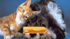 Cats and dogs music vid scared to be lonely    on Pet Lovers