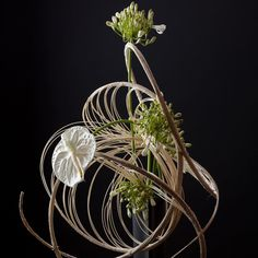 Midollino nautilus spiral is always an effective construction to showcase few flowers. It creates dimensional space to allow each flower to show off its beauty!! #floralart #floralsculpture #flowers #flowersofinstagram #flowerstagram #midollino #lineardesign