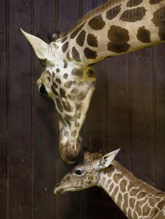15 Baby Animals Celebrating Mother's Day With Their Mommies