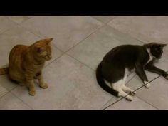 Cat Video: Honda, Pippetto, Bi e il gioco del bozzolo! | Granny's House
