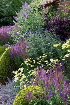 Summer border of Buddleia davidii 'Lohinch', Echinops ritro 'Veitch's blue', Achillea credo, Nepeta fassenii, Salvia superba, Anthemis tinctoria 'Sauce hollandaise', Clematis viticella 'Etoile violette'