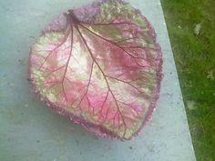 Concrete Rhubarb Leaf