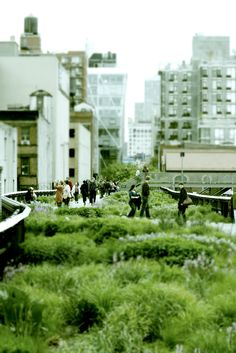 high line park, new york city | travel photography