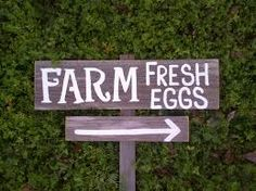 Image result for brown laying hens out at pasture