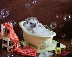 Ever wondered what a casual day in the life of a hedgehog looks like? Well, now you can find out, as photographer Elena Eremina has created an adorable series featuring the little spike balls. Happy Hedgehog, Cute Hedgehog, Hedgehog Animal, Cute Little Animals, Cute Funny Animals, Animal Pictures, Cute Pictures, Pygmy Hedgehog, Cute Hamsters