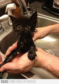 Kitty likes water NO!