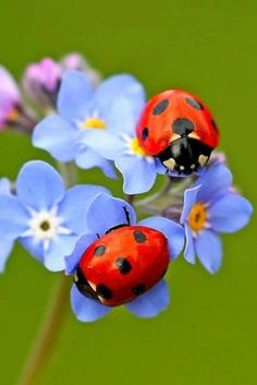 Takes 2 - Takes 2 - Beautiful Bugs, Beautiful Butterflies, Amazing Nature, Beautiful Flowers, Cute Wallpaper Backgrounds, Wallpaper Iphone Cute, Cute Wallpapers, Cool Insects, Bugs And Insects