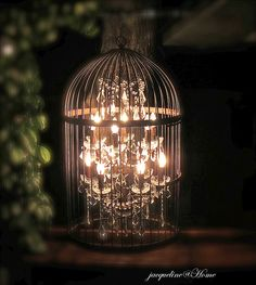 chandelier in a birdcage