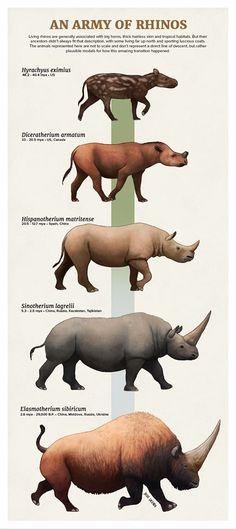 An Army of Rhinos by Julio Lacerda