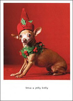 Holly Jolly Chihuahua Christmas Card