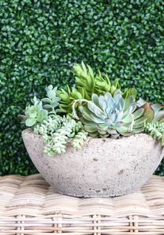 Is This The Reason You Keep Killing Your Succulents? | Apartment Therapy