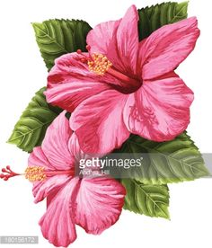 261 Best Hibiscus Images In 2019 Flower Designs Painting Flowers
