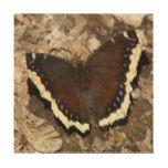 #photo - #Butterfly Wood Photo Print. Wood Print