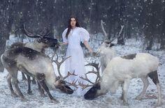 Reindeer #photography