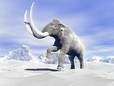 Large mammoth walking slowly on the snowy mountain against the wind Canvas Art - Elena DuvernayStocktrek Images x Snowy Mountains, Prehistoric, Fine Art America, Whale, Beast, Digital Art, Elephant, Canvas Art, Walking