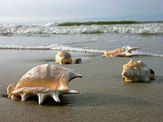 #Buzios.Conchas e corais.