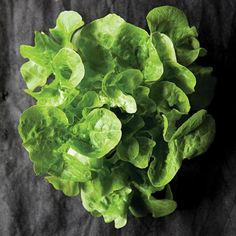 Greens Glossary of 14 types of lettuce (and other spring greens), including romaine, mache, and bibb.