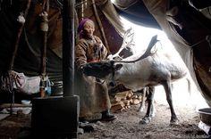 reindeer-people-hamid-sardar-afkhami-5