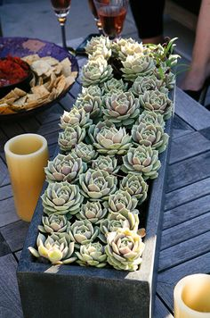 An abundance of small succulents are placed in rectangular containers for an outdoor summer celebration.