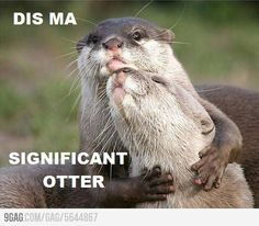 Dis ma significant otter. So cute im gonna die.