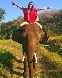 Das coisas da vida que a gente nunca mais esquece. (igual um elefante😂😂) Elefantinho fofíssimo com o qual eu me identifiquei😍😍 Parava toda hora pra comer,era meio teimoso, um pouco preguiçoso e não nadava na água suja...só na limpa, like a princess🐘💁👑 Me senti a Mogli, menina da selva Hauahauaha #superman (era o nome dele💕) #thailand #chiangmai #chiangmaithailand #elephant #lovethem #rideelephant #backpacking #lovetravelling #asia #asiatrip #travelling #fun