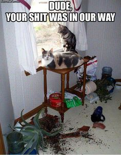 Jerks.  Cats are jerks.