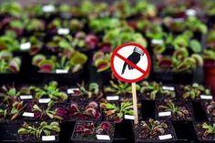 Εσείς γνωρίζετε ποια επικίνδυνα φυτά δε πρέπει να έχετε στο σπίτι; Τα φυτά δίνουν μια ξεχωριστή νότα στο σπίτι. Δημιουργούν ένα φυσικό περιβάλλον, καθαρίζου Salvia Divinorum, Natural Remedies For Gout, Natural Treatments, Freckle Remover, Neck Wrinkles, Nerium, Easy Workouts, Aloe Vera, Police Siren