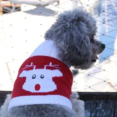 Dress your little doggy for the holiday season in this adorable Red Rudolph small dog sweater. This warm and toasty sweater is made from durable acrylic.
