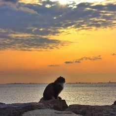 The sun rises, the sun sets. Meanwhile, our hero is lost in contemplation where his stroll should take him tomorrow.   21 Instagram Cat Pictures That Will Make You Pack and Leave for Istanbul Today #cats #travel #Istanbul