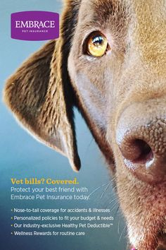 Never let expensive vet bills come between you and the best care for your best friend. Get a free quote & personalize the perfect policy for your pet today. Embrace Pet Insurance, Life Insurance, Cheap Pets, Pet Vet, Healthy Pets, Pet Life, Service Dogs, Pet Health, Dogs And Puppies