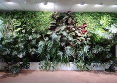 mur vegetal interieur Clarins  dans une salle de formation