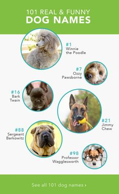After you stop laughing, pick one of these silly dog names for your fun-loving puppy!