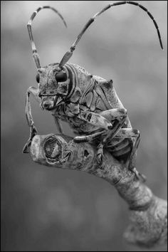 Insectos  black and white