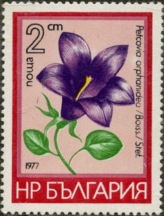 Petcovia orphanidea (Boiss.) Stet. BULGARIA 02/03/1977