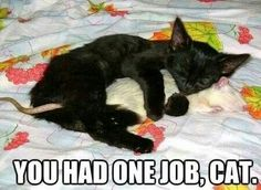 """* * CAT: """" Me fellz in love; iz dat so bad? Dis rattie is a peaceable ands smart bud."""""""