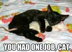 "* * CAT: "" Me fellz in love; iz dat soes bad? Dis rattie be a peaceable ands smart bud."""