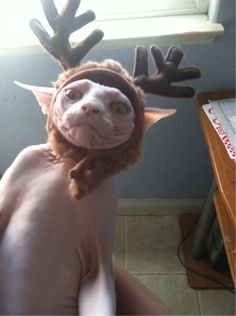 This cat who doesn't even know what a reindeer is.