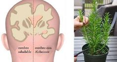 4 Herbs That Protect You From Alzheimer's Disease, Depression and Anxiety!