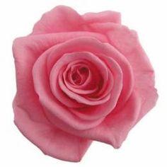 FL0100-47 Standard Rose / Sugar Pink