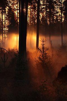 Misty Morning Sunlight