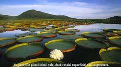 Pictures: Vitoria Regia Water Lily at Pantanal Matogrossense National Park, Brazil Beautiful Places In The World, Places Around The World, Around The Worlds, Amazing Places, Beautiful Scenery, Beautiful Forest, Stunning View, Beautiful Images, Beautiful Things