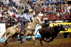 Chace Thompson throws his lasso at the head of a steer during the 82nd annual San Angelo Stock Show and Rodeo at the Foster Communication Coliseum.