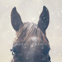 """Snowy Horse, Nature Photo, Vintage Inspired and Dreamy, Rustic Cottage Decor, Home Decor, Affordable Fine Art Photography - """"Winter Tale"""". $25.00, via Etsy."""