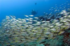 South Africa has many scuba diving spots and schools to choose from. It is the ideal location to do your scuba course. www.dirtyboots.co.za #dirtyboots #adventuresouthafrica #scubadiving Diving School, Ocean Aquarium, Scuba Diving Courses, Adventure Activities, Marine Life, Fresh Water, Underwater, South Africa, Coastal