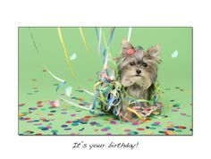 Limited Edition Misa Minnie Greeting cards are now here! Please help us support FOCHP (Friends of Orange County Pets) Rescue by buying your very own Misa Minnie Cards. 70% of profits from each set of cards sold will go directly to the rescue, helping furry friends in need.     Each set includes 5...