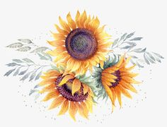 This Graphics Is Watercolor Hand Painted Sunflower - Transparent Sunflower Watercolor Png Sunflower Clipart, Sunflower Png, Sunflower Images, Watercolor Sunflower, Sunflower Pattern, Image Transparent, Logo Image, Sunflowers Background, Slide Images
