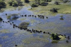 http://md1.libe.com/photo/599590-voyages_botswana_03.jpg?modified_at=1385369726&width=825