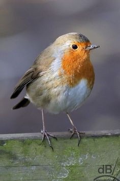 Time for your closeup, Robin Kinds Of Birds, Love Birds, Beautiful Birds, Animals Beautiful, Bird Pictures, Animal Pictures, Animals And Pets, Cute Animals, Let's Make Art