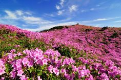 Korea Tourism Organization Official website provides various information on all things about Korea. Korea Tourism, May Bay, Festivals Around The World, Exotic Plants, Holiday Travel, South Korea, Carnival, Scenery, Around The Worlds